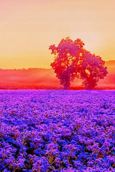 Bright Nature iPhone Wallpaper HD