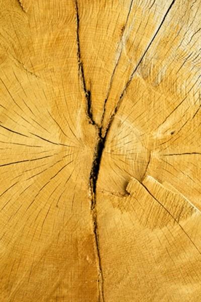 Tree Cut iPhone Wallpaper HD