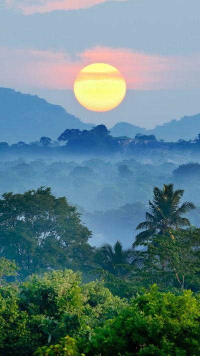 Jungle Sunset iPhone Wallpaper HD