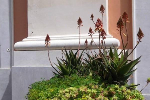 Mediterranean Succulent Containers
