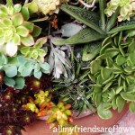 Succulent Container Gardens at Disneyland