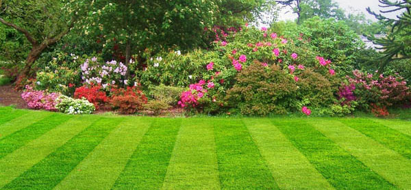 beautiful lawn