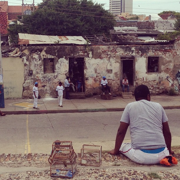 A man and his birds perched on a wall to watch street baseball in Cartagena.