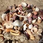 Shells on the beach at Koh Jum, Thailand
