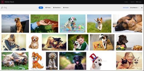 Screenshot der Adobe Stock Webseite, wo die Bilder gesucht werden können