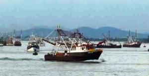 A bordo de 5 mil 641 embarcaciones menores más de 10 mil pescadores inician captura de camarón