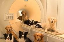 perros-entienden-emociones