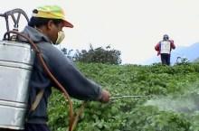 plaguicidas agrícolas