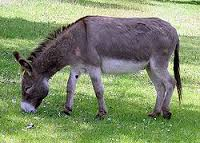 بروف الريح يقول: ليس هناك مشكلة في أكل لحم الحمير المشكلة في «الذبيح الكيري»!
