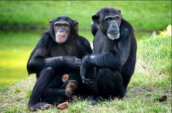 عقار مضاد للأيدز يثبت فعاليته على القردة
