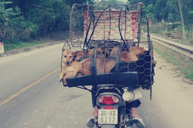 11 دولة تأكل الكلاب والقطط كوجبة أساسيّة: سكان مدينة يستهلكون 290 ألف كلب سنويًا %D9%83%D9%84%D8%A7%D8%A8