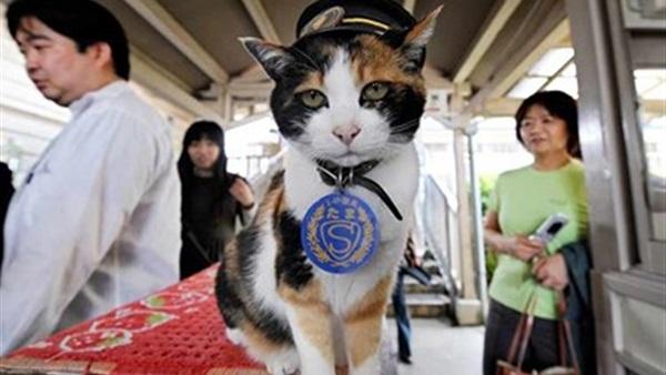 القطة تاما المديرة