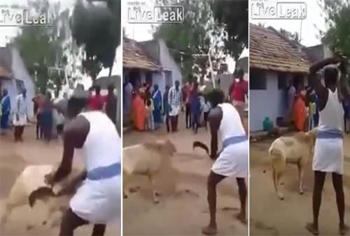 خروف ينتقم من رجل