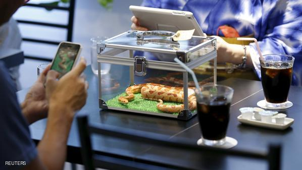 Customers take photos of a snake at the Tokyo Snake Center, a snake cafe, in Tokyo's Harajuku shopping district  August 14, 2015. The cafe has on display 35 non-venomous snakes of 20 different breeds. Open six days a week, the cafe allows customers to enjoy food and beverages while watching a small snake slither around in a cage on their table for a 1,000 yen (8.04 dollars). By paying an additional fee, customers get to hold and pet the snake.  REUTERS/Toru Hanai