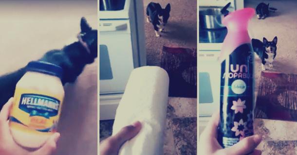 كلب-يخاف