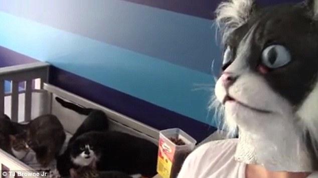 رد فعل مجموعة قطط