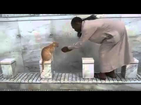 a cat in Alharam