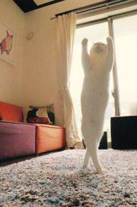 قطة ترقص الباليه تشعل مواقع التواصل الاجتماعي3