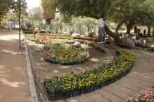 وزير الدولة بالزراعة الإتحادية يفتتح معرض الزهور السنوي الـ (75) بالمقرن