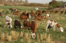 ولاية الخرطوم ترحب بمبادرة سلطنة عمان للاستثمار في الإنتاج الزراعي والحيواني