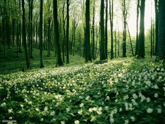 زهور الربيع إشارة إلى تغير المواسم - جزيرة روغن - ألمانيا