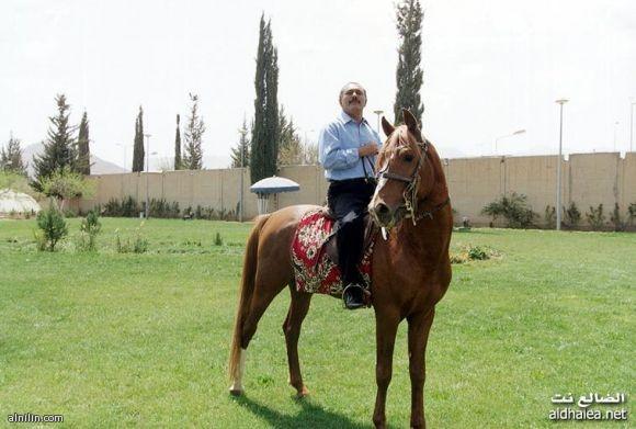 الرئيس اليمني علي عبد الله صالح - يركب حصان