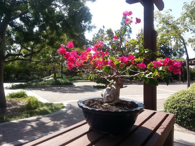 Bonsai plant.