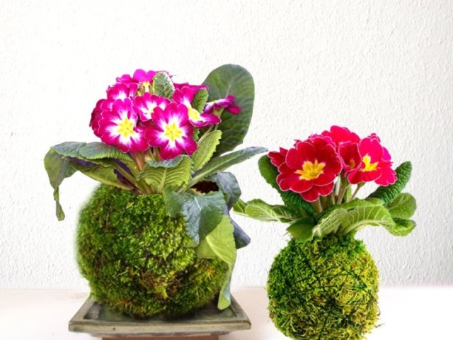 diy jardinage comment cr er un kokedama facilement blog jardin alsagarden le magazine. Black Bedroom Furniture Sets. Home Design Ideas
