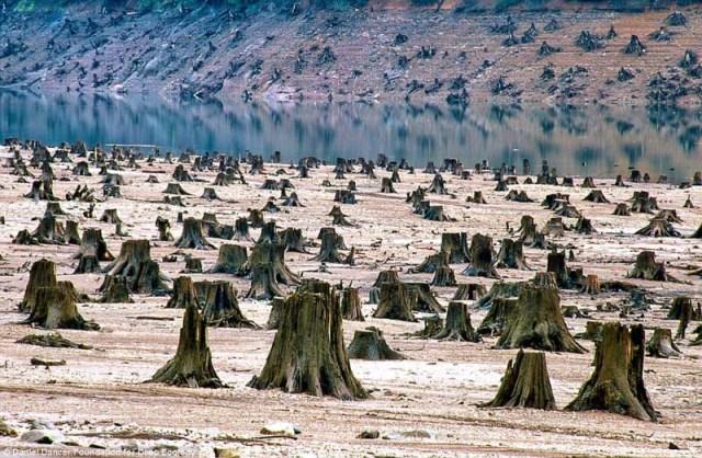Árvores derrubadas para a construção de uma barragem, Oregon