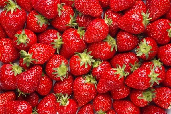 comer_morangos_todos_dias_11