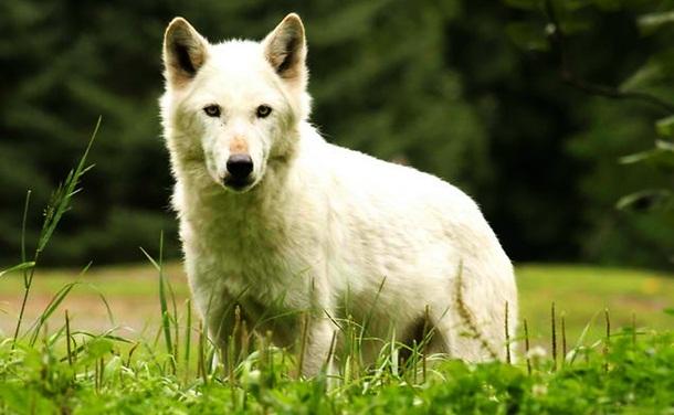 10. Cães domésticos - Imgur