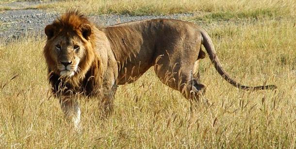 14. Leão - Imgur