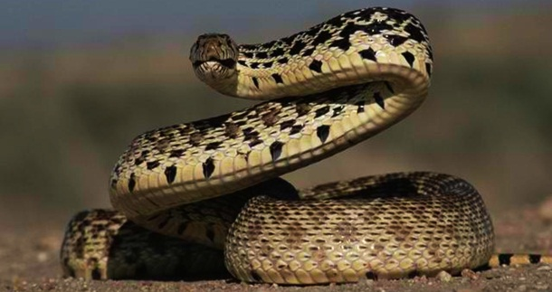 4. Serpentes - Imgur