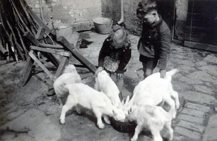 Zöllers Ziegen um 1940, betreut von Käthe und Georg Zöller