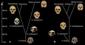 evrim-kafatasi-insan-maymun