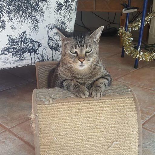 this pussycat is not impressed