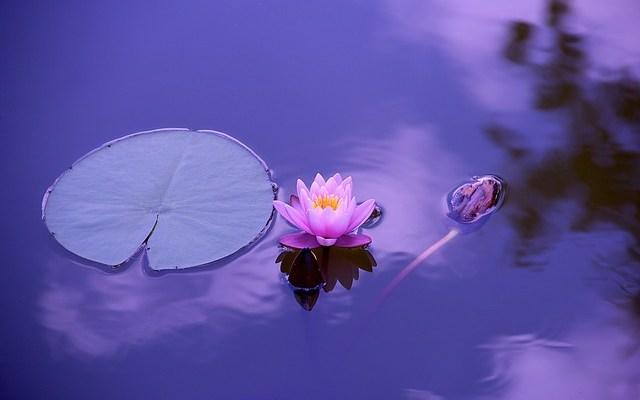 Mindfulness y Demencia
