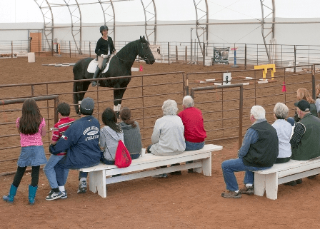 Hearts and Horses, Equine Assisted Therapy for Veterans