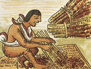 maya-amaranto