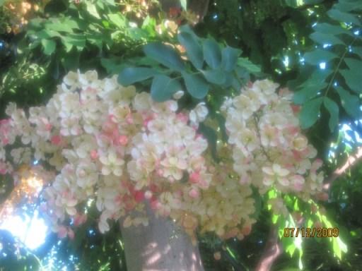 Rainbow Shower Flowers