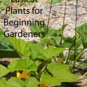 The 5 Easiest Plants for Beginning Gardeners
