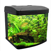 to have 1 inch of NARROW bodied fish per WELL FILTERED actual gallon