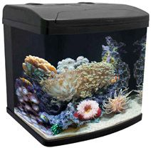 Saltwater Aquarium Fish For Beginners For beginners, a small