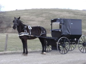 Amish buggy's are a common site when driving in Amish Country. The Amish have a fund that helps to pay for road improvements on our highways and gives them as much right to be on the road as a gas powered vehicle.