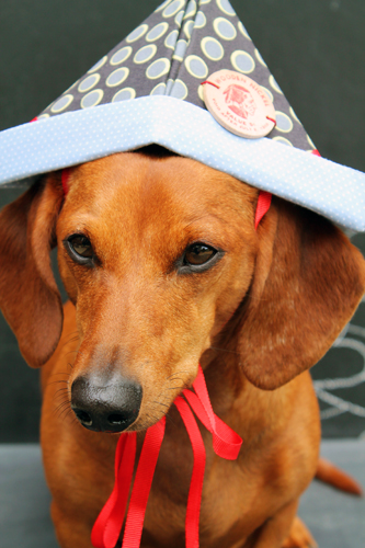Ammo the Dachshund - Imagination Hat