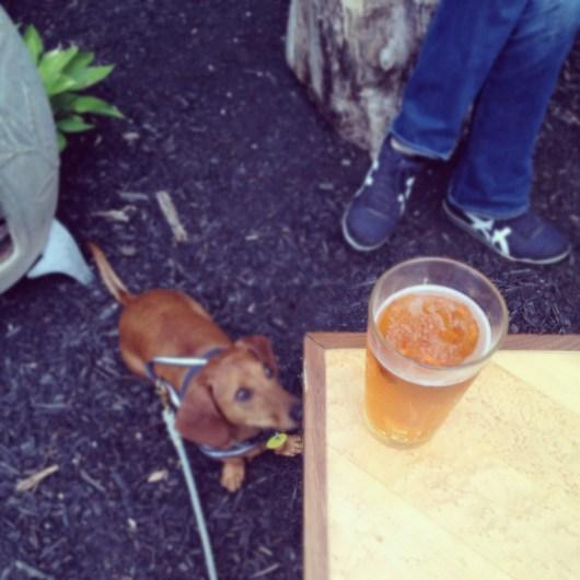 Ammo the Dachshund's Instagram Weekend