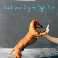 Let's Get Tricky! Teach your Dog to High-Five