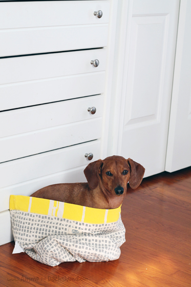 Toy Storage for Dogs // Ammo the Dachshund