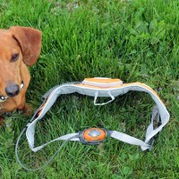 Dog Walking Light Belt Review & Giveaway