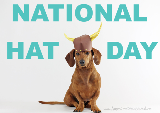 National Hat Day with Ammo the Dachshund